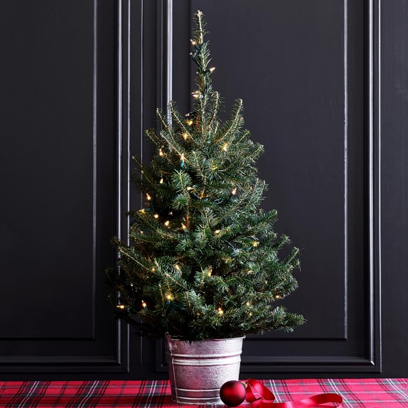 Fresh Tabletop Christmas Tree With Lights Williams Sonoma