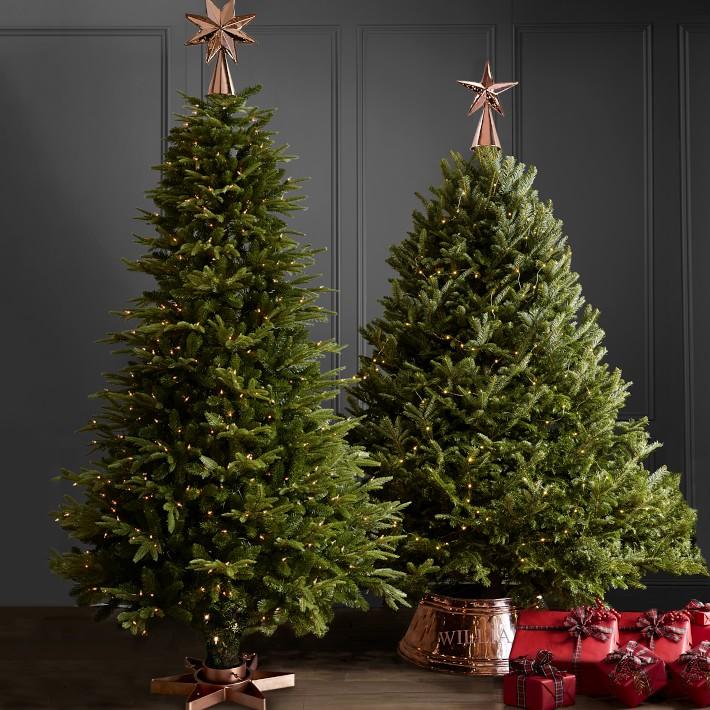 Fresh Blue Ridge Mountain Christmas Tree