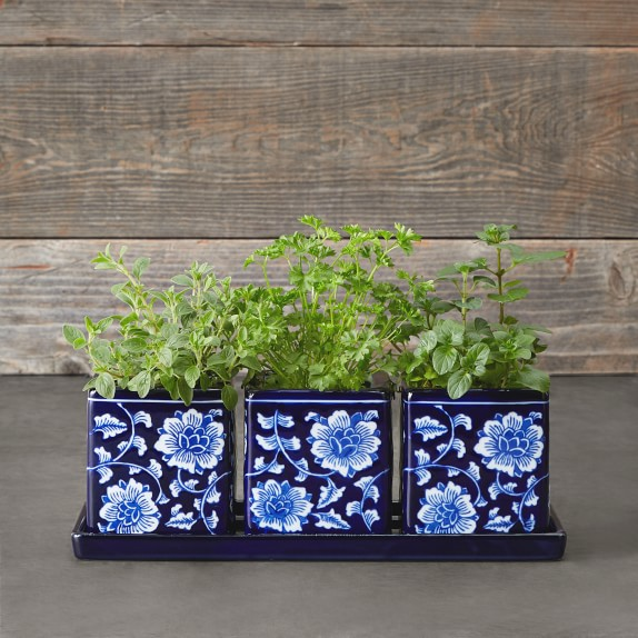 Blue White Ceramic Herb Tray With Pots Set Of 3 Williams Sonoma